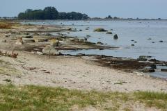 Olandia-brzeg-morza