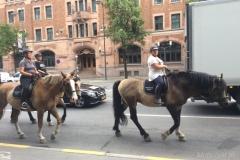 Szwecja motocyklem - prom - konie